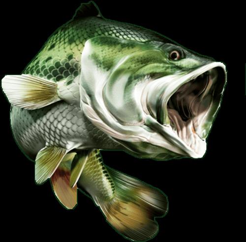 Startseite Big Fish Onlineshop